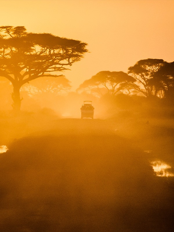 Luxury Safari